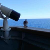 EUNAVFOR Med. Une opération en mer, des arrangements logistiques